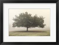 Trees in the Fog II Framed Print