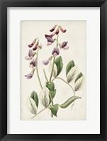 Framed Antique Botanical Collection I
