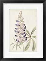 Framed Antique Botanical Collection II