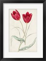 Framed Antique Botanical Collection III