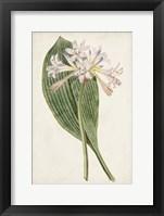 Framed Antique Botanical Collection IV