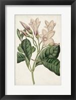 Framed Antique Botanical Collection IX