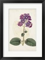 Framed Antique Botanical Collection V