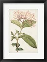 Framed Antique Botanical Collection VI