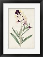 Framed Antique Botanical Collection VII