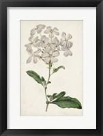 Framed Antique Botanical Collection VIII