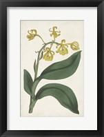 Framed Antique Botanical Collection X