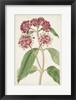 Framed Antique Botanical Collection XI