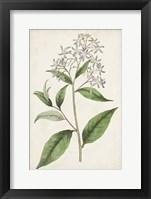 Framed Antique Botanical Collection XII