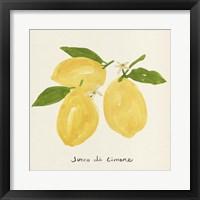 Citrus Trattare I Framed Print