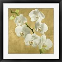 Framed Orchids on a Golden Background I
