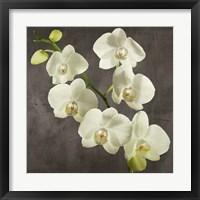 Framed Orchids on Grey Background I