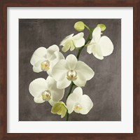 Framed Orchids on Grey Background II