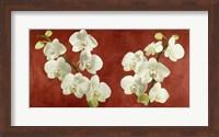 Framed Orchids on Red Background