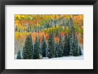 Framed Christmas Trees
