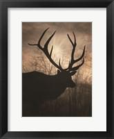 Elk Sunrise I Framed Print