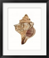 Neutral Shell Collection 1 Framed Print