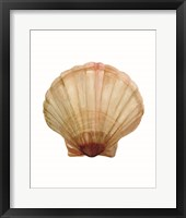 Neutral Shell Collection 2 Framed Print