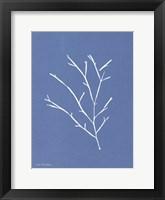 Blue Botanical III Framed Print