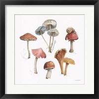 Mushroom Medley 02 Framed Print
