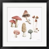 Mushroom Medley 03 Framed Print