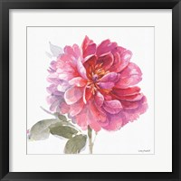 Obviously Pink 02A Framed Print