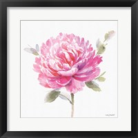 Obviously Pink 03A Framed Print