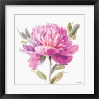 Obviously Pink 05A Framed Print