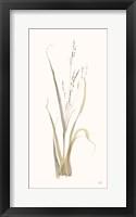 Moor Grass Framed Print