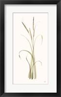 Lyme Grass Framed Print