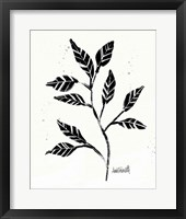Framed Botanical Sketches V