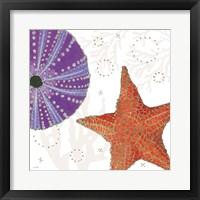 Shimmering Shells III Framed Print