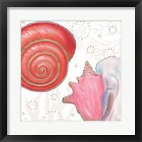 Shimmering Shells IV Framed Print