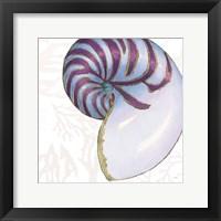 Framed Shimmering Shells VI