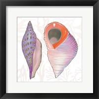 Framed Shimmering Shells X