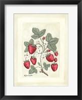 Sweet Summer Strawberries I Framed Print