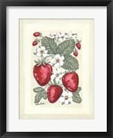 Sweet Summer Strawberries II Framed Print