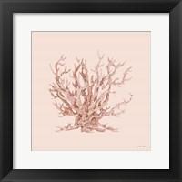 Pink Coral II Framed Print