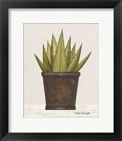 Potted Aloe Vera Framed Print