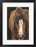 Horse Portrait II Framed Print