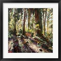 Framed Cedar Shadows