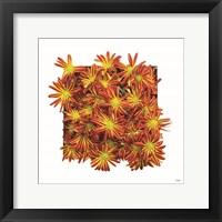 Floral Pop IV Framed Print