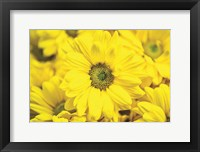 Floral Pop V Framed Print