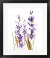 Lavender Fields II Framed Print