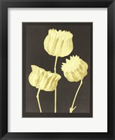 Forms in Nature 1 Framed Print