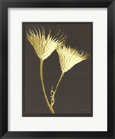 Forms in Nature 2 Framed Print
