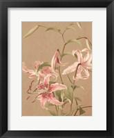 Antique Botanical Collection 3 Framed Print