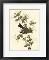 Vintage Bird 1 Framed Print