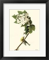 Vintage Bird 3 Framed Print