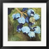 Blueberries 1 Framed Print